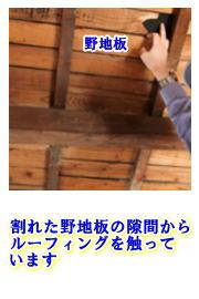 noji1.jpg